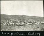 006-02: Herd of Sheep Feeding by George Fryer Sternberg 1883-1969