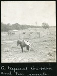 006-03: Cowboy and his Ranch by George Fryer Sternberg 1883-1969
