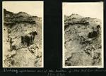 017-01: Horses Pulling Wooden Box by George Fryer Sternberg 1883-1969