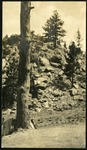 019-02: Photo of Tree 2 by George Fryer Sternberg 1883-1969