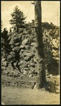 019-03: Photo of Tree 3 by George Fryer Sternberg 1883-1969