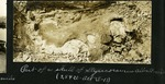 006-02: Partial fossil of the skull of Styracosaurus albertensis by George Fryer Sternberg 1883-1969