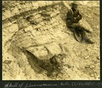 014-02: Skull of the Chasmosaurus belli by George Fryer Sternberg 1883-1969