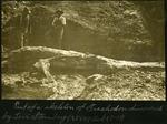 015-03: Levi Sternberg's Discovered Trachodon Fossil by George Fryer Sternberg 1883-1969