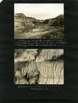 020-00: George Sternberg Photo Album Number 2 by George Fryer Sternberg 1883-1969