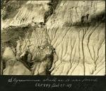 020-02: Styracosaurus Skull by George Fryer Sternberg 1883-1969