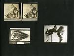 023-00: George Sternberg Photo Album Number 2 by George Fryer Sternberg 1883-1969