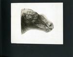 015-00: by George Fryer Sternberg 1883-1969
