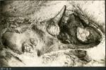 022-03: by George Fryer Sternberg 1883-1969
