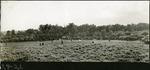 027-03: Baseball Game by George Fryer Sternberg 1883-1969