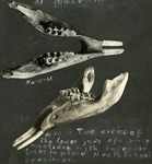 005_04: Camping in Oakley and Collection of Fossil Specimens by George Fryer Sternberg 1883-1969