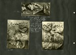 006_00: Collection of Fossil Specimens of the Turtle Protostega by George Fryer Sternberg 1883-1969