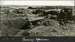 007_03: Excavation of Specimen by George Fryer Sternberg 1883-1969