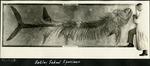 008_01: Sternberg Workshop and Specimen of Fossil Fish by George Fryer Sternberg 1883-1969