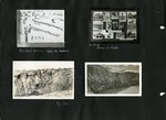 020_00: Different Fossil Specimens by George Fryer Sternberg 1883-1969