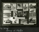 020_02: Different Fossil Specimens by George Fryer Sternberg 1883-1969
