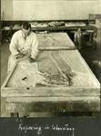 024_02: Large Fossil Fish Specimen by George Fryer Sternberg 1883-1969