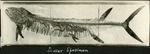 003_01: Fish Fossil by George Fryer Sternberg 1883-1969