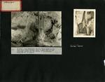 005_00: by George Fryer Sternberg 1883-1969