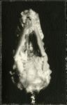 030_02: Fossil by George Fryer Sternberg 1883-1969