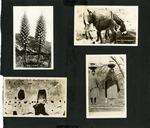 007_00: George Sternberg Photo Album Number 6 by George Fryer Sternberg 1883-1969
