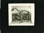 003_00: George Sternberg Album Number 7 by George Fryer Sternberg 1883-1969