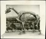 003_01: An Unidentified Specimen by George Fryer Sternberg 1883-1969