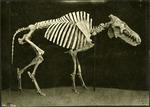 004_01: An Unidentified Specimen by George Fryer Sternberg 1883-1969