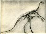 007_02: A Skeleton of a Dinosaur by George Fryer Sternberg 1883-1969