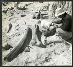 014_01: Working on Fossils in the Field by George Fryer Sternberg 1883-1969