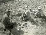 014_04: Three Men Working on Fossils by George Fryer Sternberg 1883-1969