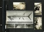 017_00: George Sternberg Album Number 7 by George Fryer Sternberg 1883-1969