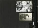 018_00: George Sternberg Album Number 7 by George Fryer Sternberg 1883-1969