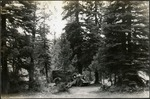 004_01: An Automobile Parked Among the Trees by George Fryer Sternberg 1883-1969