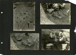 005_00: George Sternberg Photo Album Number 8 by George Fryer Sternberg 1883-1969