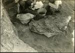 005_02: Preparing the Smaller Fossil by George Fryer Sternberg 1883-1969