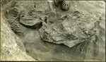 005_03: Preparing the Bigger Rock of Fossils by George Fryer Sternberg 1883-1969