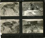 009_00: George Sternberg Photo Album Number 8 by George Fryer Sternberg 1883-1969
