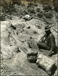 011_01: A Man Sitting Next to Large Limb Bones by George Fryer Sternberg 1883-1969