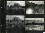 023_00: George Sternberg Photo Album Number 8 by George Fryer Sternberg 1883-1969