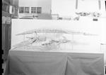 Plesiosaur, complete by George Fryer Sternberg 1883-1969