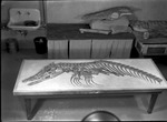 Mosasaur by George Fryer Sternberg 1883-1969