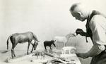George F. Sternberg Paints Model Horses.