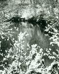 Snow along Big Creeek