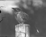 Bird on Perch by Lyman Dwight Wooster
